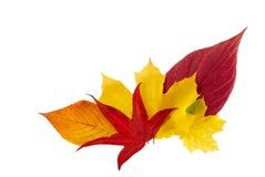 Manojo ornamental de hojas de otoño Fotos de archivo libres de regalías