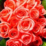 Manojo rojo brillante de las rosas Imágenes de archivo libres de regalías