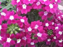Manojo rosado de las flores con el sábalo del rosa y blanco fotografía de archivo