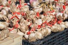 Manojos de ajo italiano Imagen de archivo libre de regalías