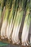 Manojos de cebollas y de puerros, agricultura biológica Foto de archivo libre de regalías