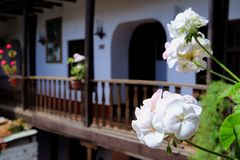 Manojos de flores blancas florecientes del geranio con Peru Traditional House Balcony septentrional borroso en fondo fotos de archivo