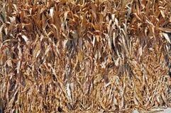 Manojos de granos secos Fotografía de archivo libre de regalías
