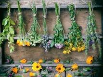 Manojos de hierbas curativas imagen de archivo libre de regalías