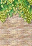Manojos de la acuarela de uvas blancas que cuelgan en la rama Stock de ilustración