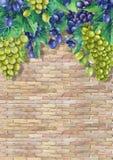 Manojos de la acuarela de uvas blancas y azules en la rama Libre Illustration