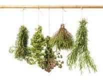 Manojos de la ejecución de hierbas frescas aisladas en blanco Fotografía de archivo libre de regalías