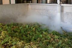 Manojos de la uva blanca procesados con nitrógeno Foto de archivo