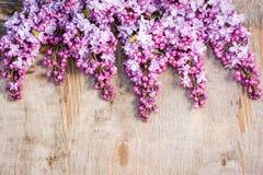 Manojos de lila en viejo fondo de madera lamentable Fotos de archivo