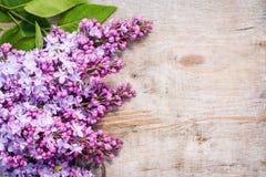 Manojos de lila en viejo fondo de madera lamentable Imagen de archivo libre de regalías