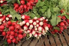 Manojos de rábanos rojos y blancos Fotografía de archivo libre de regalías