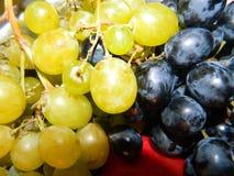 Manojos de uvas amarillas y azules, bayas grandes Fotos de archivo