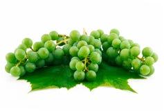 Manojos de uvas verdes maduras con la hoja aislada Foto de archivo libre de regalías