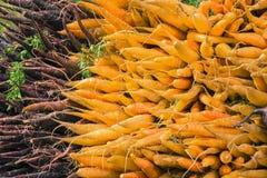 Manojos de zanahorias Foto de archivo