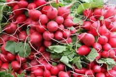 Manojos del rábano rojo fotos de archivo