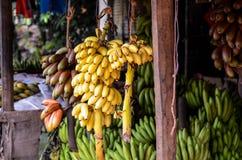 Manojos enormes de plátanos en venta en Sri Lanka Imagenes de archivo