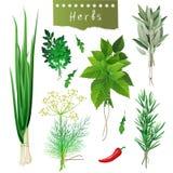 Manojos herbarios Foto de archivo libre de regalías