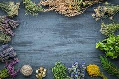 Manojos medicinales de las hierbas en el tablero de madera gris con el espacio de la copia Fotos de archivo libres de regalías