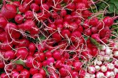 Manojos y raíces de Radishe Foto de archivo