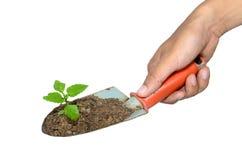 Manopola una cazzuola e una pianta di giardinaggio su un isolato. Fotografie Stock Libere da Diritti