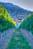 Manor in a vineyard Royalty Free Stock Image