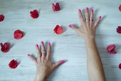 Open hands with nails painted between petals royalty free stock image