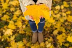 Manos abiertas de la muchacha con las hojas amarillas Imagen de archivo libre de regalías