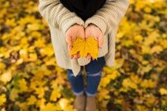 Manos abiertas de la muchacha con las hojas amarillas Imagenes de archivo