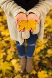 Manos abiertas de la muchacha con las hojas amarillas Foto de archivo