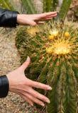 Manos casi que asen el cactus Imagen de archivo