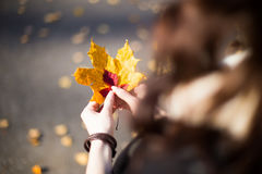 Manos con el primer de la hoja del otoño Fotografía de archivo libre de regalías