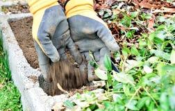 Manos con el suelo en el jardín Imagen de archivo libre de regalías