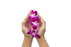 Manos con la flor de la orquídea fotos de archivo libres de regalías