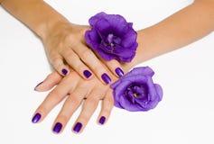 Manos con la manicura y las flores púrpuras Fotos de archivo