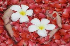 Manos con las flores Imágenes de archivo libres de regalías