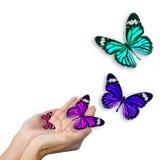 Manos con las mariposas Imágenes de archivo libres de regalías