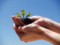Manos con una planta Imagen de archivo libre de regalías