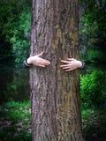 Manos de la chica joven que abrazan un árbol Imagen de archivo libre de regalías