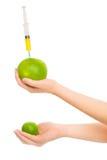 Manos de la mujer con dos frutas cítricas Imagen de archivo