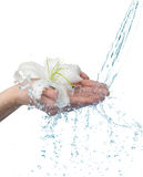 Manos de la mujer con el lirio y la secuencia del agua. Imágenes de archivo libres de regalías