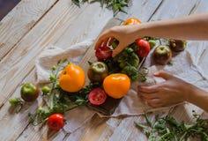 Manos de la mujer con los tomates y las ramitas coloridos del tomate en la tabla de madera blanca vieja Fotografía de archivo libre de regalías