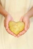 Manos de la mujer joven que sostienen la patata en dimensión de una variable del corazón Foto de archivo
