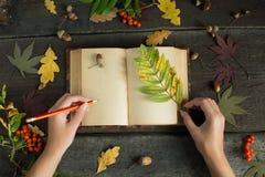 Manos de la mujer que dibujan o que escriben con el lápiz en cuaderno abierto del vintage sobre fondo de madera Todavía del otoño Foto de archivo