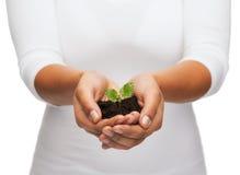 Manos de la mujer que sostienen la planta en suelo Imagen de archivo