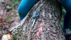 Manos de la ni?a o del muchacho que usa un cuchillo suizo, aserrando un pedazo de madera en el bosque, nadie metrajes