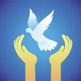 Manos de la paloma y del ser humano del vector - símbolo de paz Imagen de archivo libre de regalías