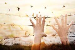 Manos de la prisión del alambre con el vuelo del pájaro en fondo del cielo de la puesta del sol Fotos de archivo