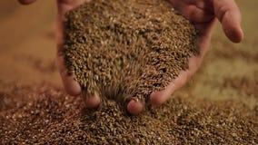 Manos de las linazas de colada del granjero de sexo masculino, aditivo alimenticio en menú sano de la nutrición metrajes