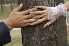 Manos de los anillos de bodas de los amantes en el tronco de un árbol Imágenes de archivo libres de regalías