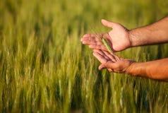 Manos de los granjeros Foto de archivo libre de regalías